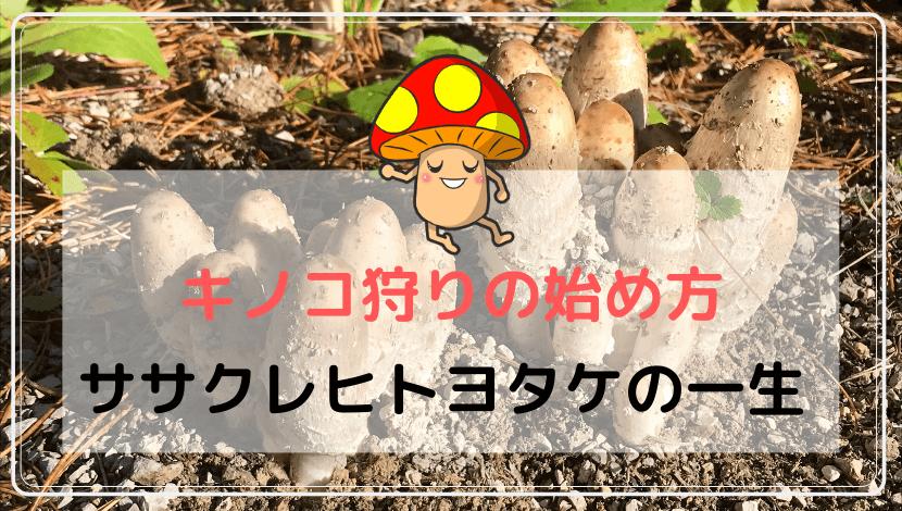 ササクレヒトヨタケ・コプリーヌの一生